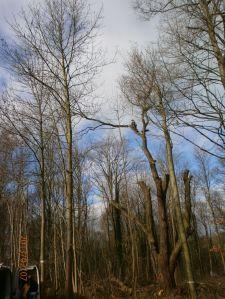 Baumfällung